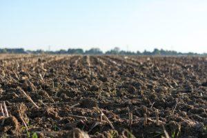 Zemlja za gojenje konoplje